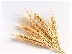 Grain_9
