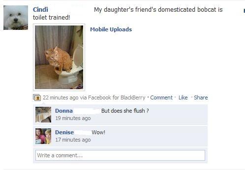 Domesticated-bobcat