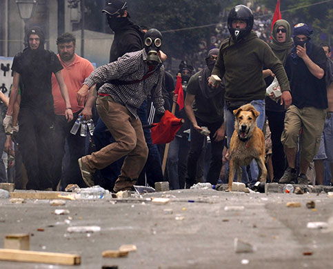 Protest dog
