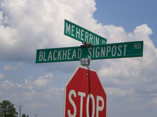 Blackhead_Signpost_Road_Brophy